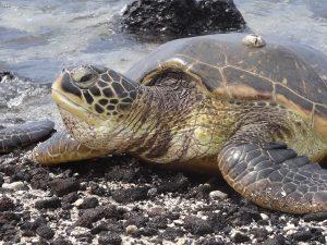 turtle-405801_640