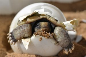 desert-tortoise-987972_1280
